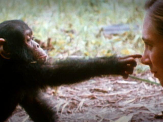¿Sabías que…? Jane Goodall